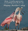 • Mother and Juvenile Roseate Spoonbills<br /> • The juvenile Spoonbill is so happy, she wanted to wish all the mothers a very Happy Mother's Day.