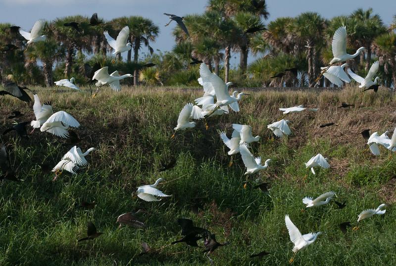 • Location - Stick Marsh<br /> • Bunch of birds taking off