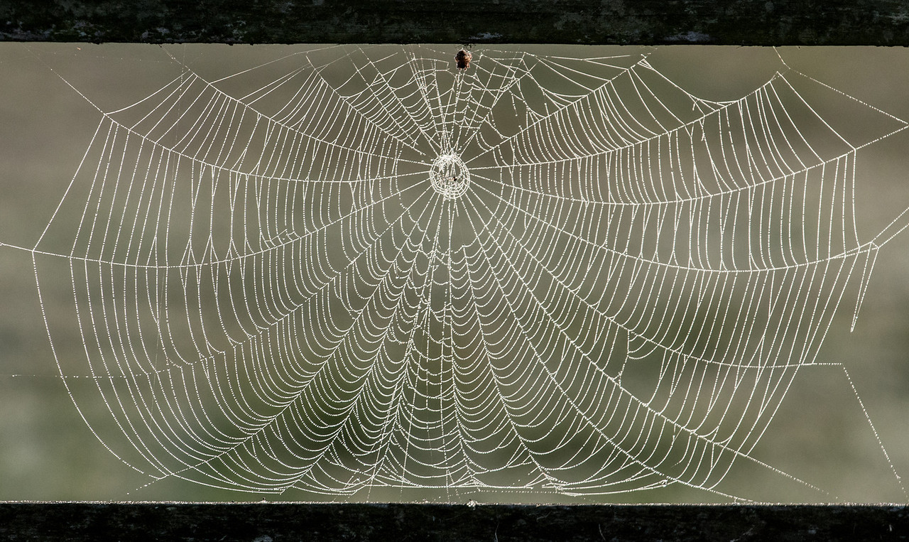 • Location - Moccasin Island Tact<br /> • Spiderweb