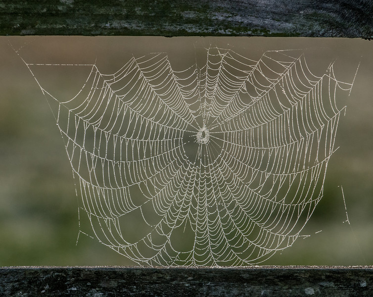 • Location - Moccasin Island Tact<br /> • Spiderweb