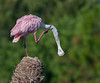 • Location - Viera Wetlands<br /> • I have a bad itch
