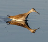 • Location - Merritt Island National Wildlife Refuge<br /> • Lesser Yellowlegs with its reflection