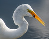 The Great Egret says this a good appetizer