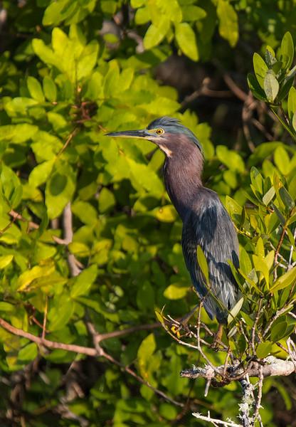 Merrit Island National Wildlife Refuge