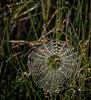 •Location - Kenansville<br /> • Spiderweb