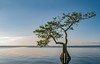 Blue Cypress Lake