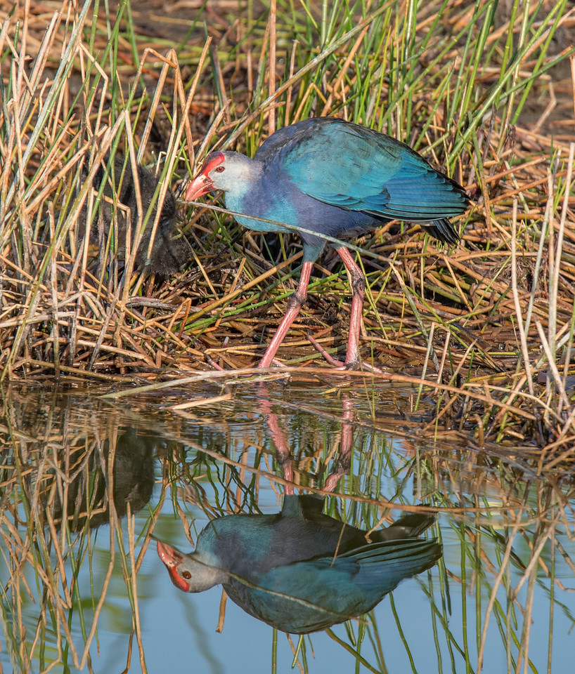 Location - Wakodahatchee Wetlands