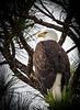 Location - Merrit Island National Wildlife Refuge