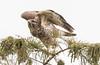 Location - A.R.M. Loxahatchee National Wildlife Refuge