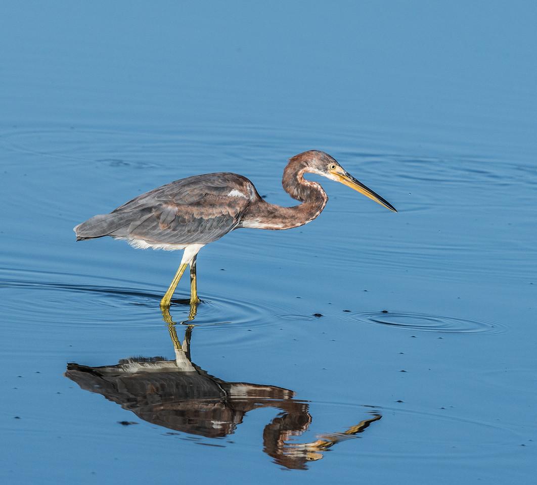 Location- Biolab Rd Merritt Island National Wildlife Refuge