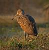 Location - Viera Wetlands 2/21/16
