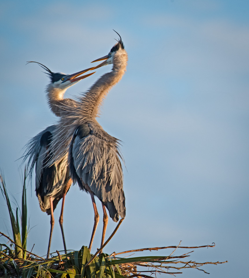 Location - Viera Wetlands 2/21/16