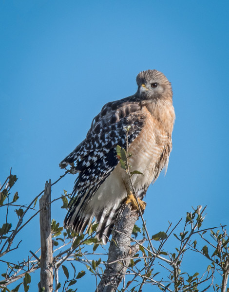 Location - Three Lakes Park Wildlife Area ( Pairie Lake Rd)