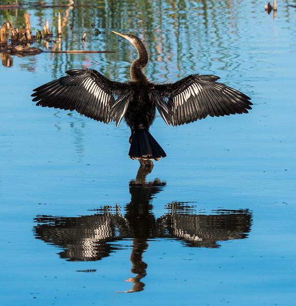 Location - Lake Apopka