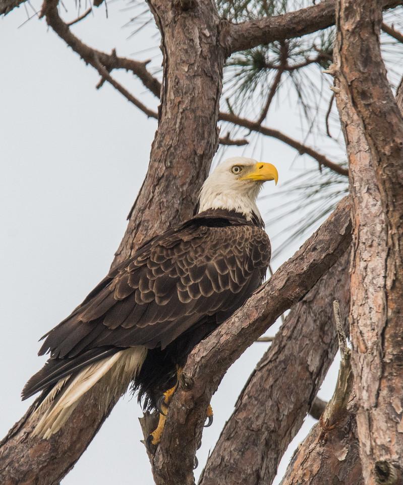 Location - Merritt Island National Wildlife Refuge