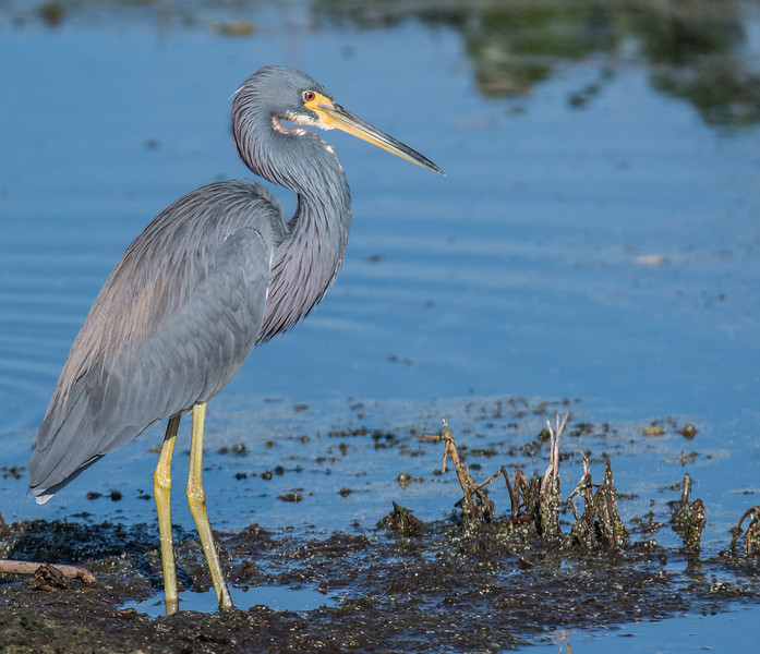 Location - Oralndo Wetlands Park