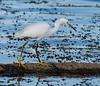Location - Viera Wetlands