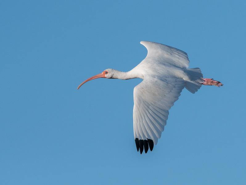 Location - Merritt Island Island National Wildlife Refuge