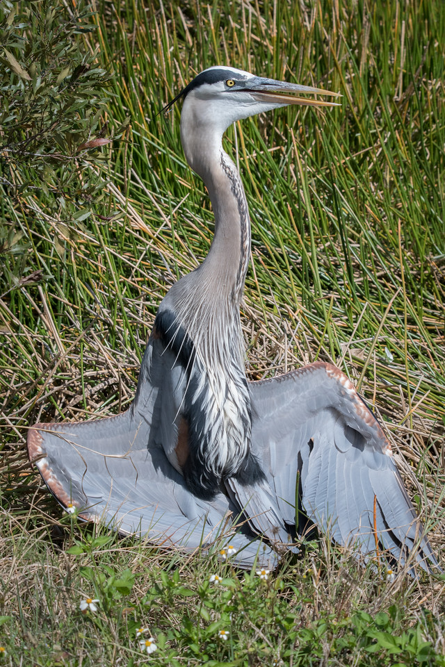 Location - Viera Wetlands