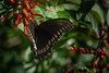 Location - Arnold Butterfly Haven