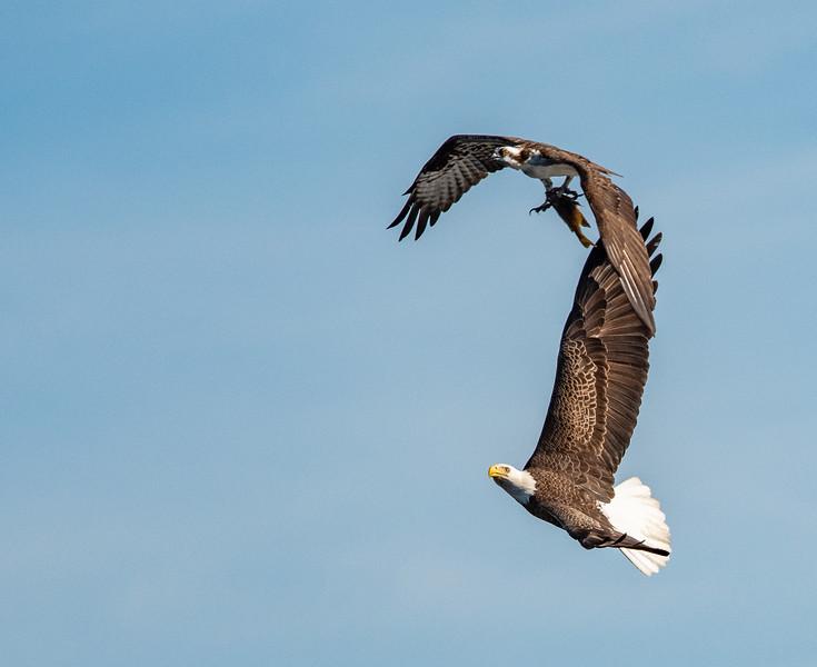 Location - Three Lakes Wildlife Management Area, Kenansville