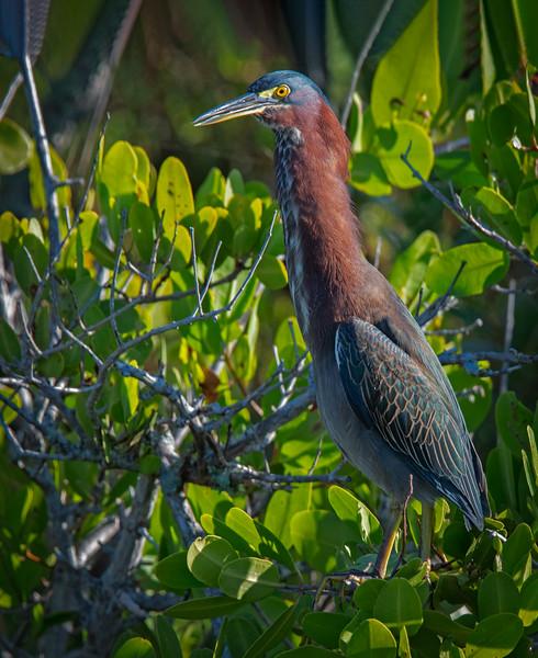 Location - Black Point Wildlife Drive in Merritt Island