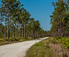 Location - Three Lakes Wildlife Management Area in Kenansville