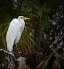 Location - Merritt Island Wildlife Refuge,