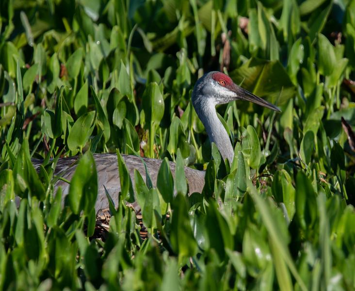 Location - Orlando Wetlands Park