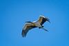 Location - Black Point Drive - Merritt Island Island National Wildlife Refuge