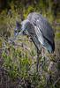 Location - Black Point Drive, Merritt Island National Wildlife Refuge
