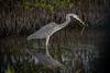 Location - Merritt Island National Wildlife Refuge - Black Point Drive