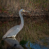 Location - Black Point Drive - Merritt Island National Wildlife Refuge