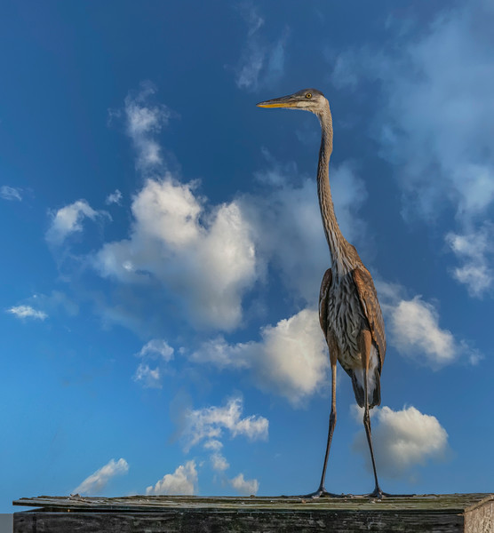 Location - Blue Heron Wetlands in Titusville