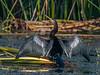 Location - Blue Heron Wetlands