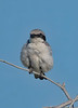Location - Bald Eagle BE994 Nest Area