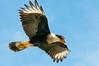 Viera Wetlands - October 12, 2014 : Bird Photos from the Viera Wetlands.