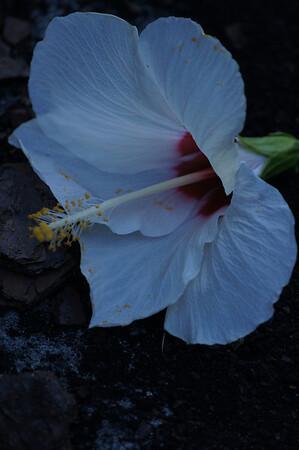 photo walkers evening at mounts botanical garden 7/10/13