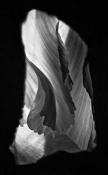 Iris Macro B&W Abstract
