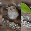 Sparrow for ID