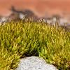 Moss focus stack