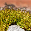 Moss focus stack