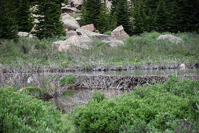 Beaver Dam on Pikes Peak South Slope