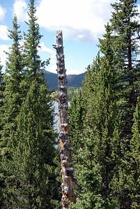 Old Tree Trunk Along Mason Reservoir