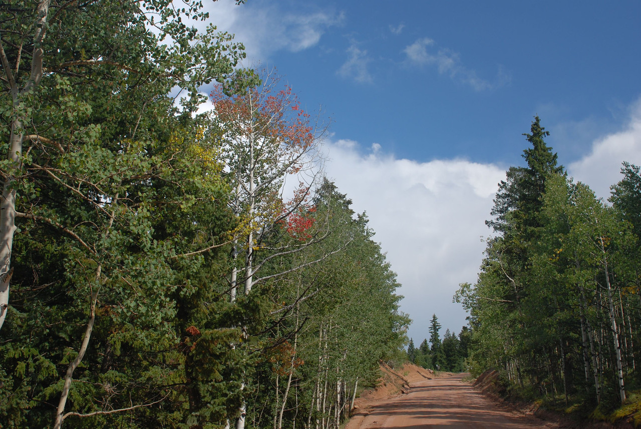 Rampart Range Road, showing the first tinges of color in the normally green Aspen trees.