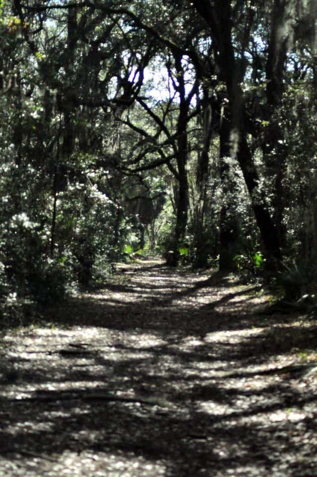 Pinckney Island, SC pathway