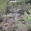 pine barren bog