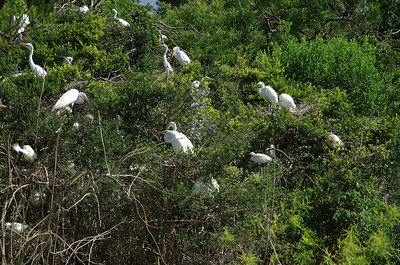 Nesting Colony