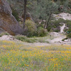 A small field of California Poppies that refused to open up becuase it was cool most of the day.