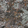 Up close look at the Rhyolitic breccia that makes up most of the rock formations in Pinnacles National Monument.